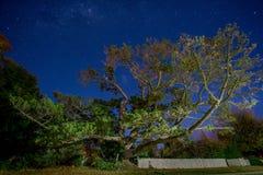 在小屋前面的极大的树在星下 库存图片