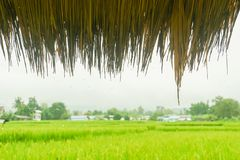 在小屋屋顶的雨珠有米绿色领域背景的 库存图片