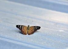 在小屋的蝴蝶 免版税图库摄影