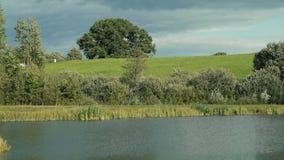 在小山上的橡木由池塘 股票视频