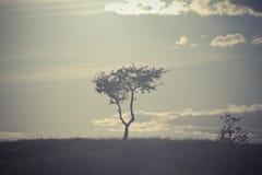 在小山上面的一棵孤立树 免版税库存图片