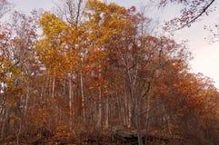 在小山上面的俏丽的秋天森林 免版税库存照片