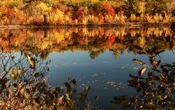 在小山中的一个湖与明亮的五颜六色的秋天树 晴朗的日 阿科底亚国家公园 美国 缅因 免版税库存照片