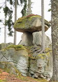 在小山佩尔尼克的岩石牛肝菌蕈类 免版税库存图片