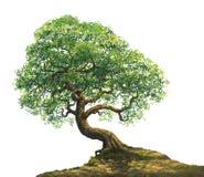 在小山例证的一棵大树 库存照片