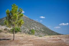 在小山前的树 免版税图库摄影