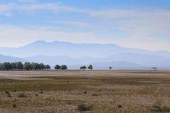在小山前面被排行的树 免版税库存照片