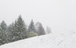 在小山和云杉的树的暴风雪 免版税库存图片
