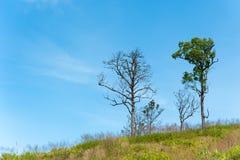 在小山和蓝天的树本质上 免版税库存图片