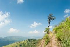 在小山和蓝天的树本质上 库存图片
