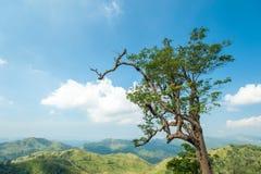 在小山和蓝天的树本质上 免版税库存照片