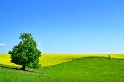 在小山和绿草的偏僻的树 免版税库存图片