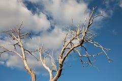 在小山塔斯马尼亚岛的孤立树 免版税图库摄影