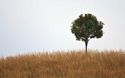 在小山的一个结构树 免版税库存照片