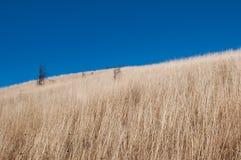 在小山的一个贫瘠落寞领域与干黄色草 免版税库存照片