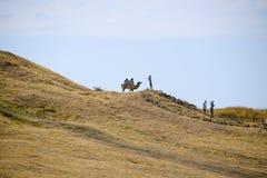 在小山的一头骆驼与干草 免版税库存图片