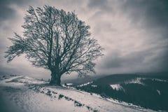在小山的一棵偏僻的多枝树 33c 1月横向俄国温度ural冬天 免版税库存照片