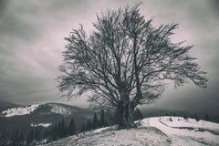 在小山的一棵偏僻的多枝树 33c 1月横向俄国温度ural冬天 免版税库存图片