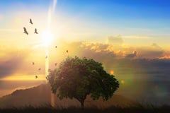 在小山的一棵偏僻的树在日落期间 美好的日落在中 库存照片