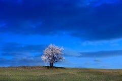 在小山的一棵树在剧烈的多云天气 库存图片