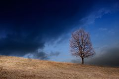 在小山的一棵树在剧烈的多云天气 库存照片