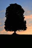 在小山的一棵树 免版税图库摄影