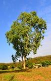在小山的一棵树 免版税库存图片
