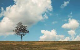 在小山的一棵树 图库摄影