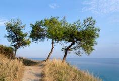 在小山的三棵杉树在爱琴海的背景 库存图片