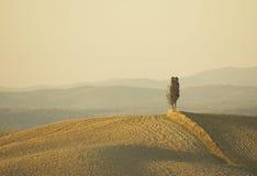 在小山的偏僻的柏树 库存照片