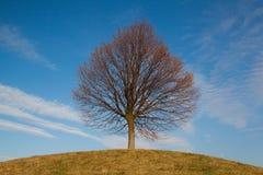 在小山的偏僻的结构树 库存图片