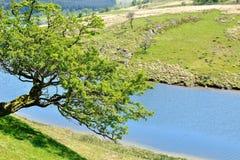 在小山的偏僻的树 免版税库存照片