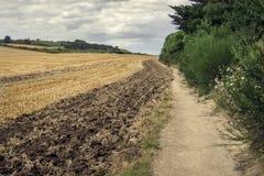 在小山的农业领域 免版税库存照片