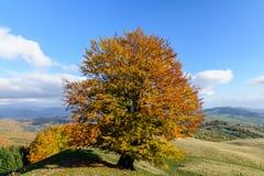 在小山的冠的孤立树 一棵孤立树的水平的看法 免版税图库摄影