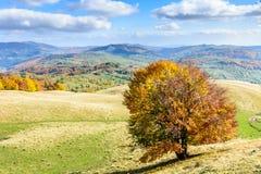 在小山的冠的孤立树 一棵孤立树的水平的看法 库存照片