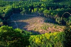 在小山的培养的区域,三叶橡胶树,泰国培养的区域  免版税库存图片