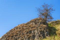 在小山的孤立树在凯瑟琳小河附近在哥伦比亚河唛哥 免版税库存图片