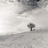 在小山的孤立树 免版税库存照片