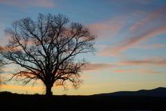 在小山的孤立橡树剪影在日出 免版税库存照片