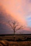 在小山的干燥树在日落背景 库存照片