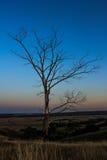 在小山的干燥树在日落背景 免版税库存图片