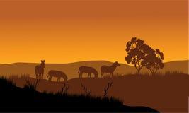在小山的斑马剪影 免版税图库摄影
