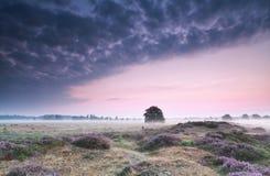 在小山的日出与开花的石南花 图库摄影