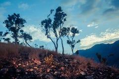 在小山的日落在热带气候 免版税图库摄影