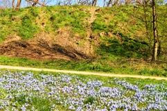 在小山的春天 免版税图库摄影