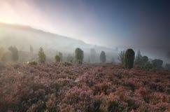 在小山的有薄雾的早晨与野花 库存图片