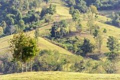 在小山的树与被弄脏的森林 免版税图库摄影