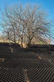 在小山的树以防止土壤侵蚀的一个黑塑料蜂窝框架 库存图片