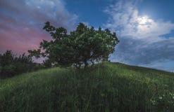 在小山的树在晚上 免版税库存图片