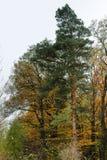 在小山的树在秋天 旅行 库存图片